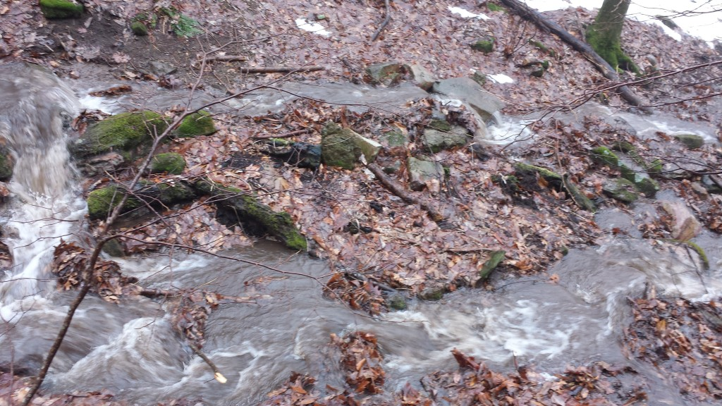 One of these two streams is the trail; glad I switched to waterproof shoes
