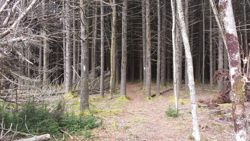 I could not see into these woods...like an enchanted forest