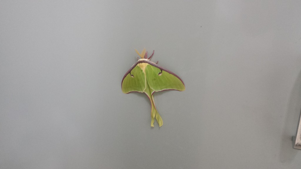 Moth on a bathroom stall, NOC