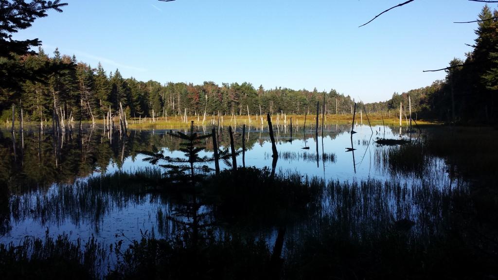 Serene pond on the trail
