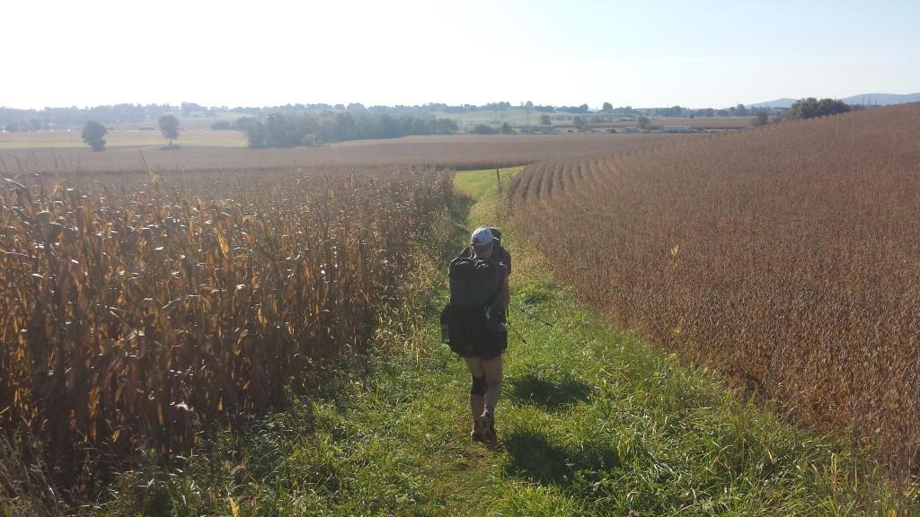 Birdie hiking through an AT cornfield